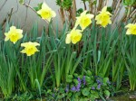 le printemps à la Gerine 03 2015 2