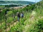 Balades en Vignes 2015 15