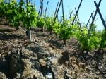 Balades en Vignes 2015 18