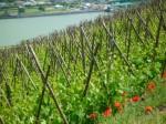 Balades en Vignes 2015 25