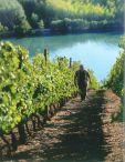 Y.Cuilleron dans les vignes de Seyssuel