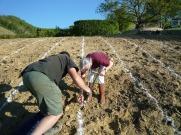 On plante la vigne à la Gerine